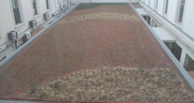 Imagen del mismo espacio al momento de finalizar la instalación de la cubierta verde.